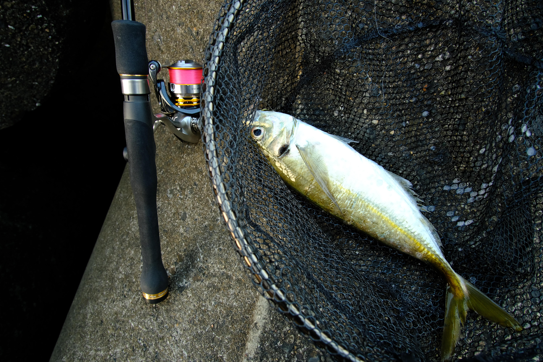 アジングとメバリングの記事一覧。おすすめの釣り具なども紹介。